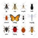 Insectes volants et rampants