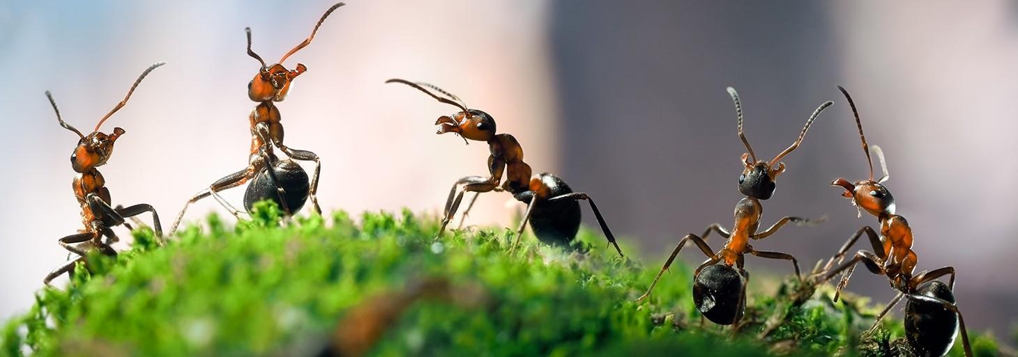 Lutte contre les fourmis, Découvrez nos produits professionnels  pour vous débarrasser de ces nuisibles